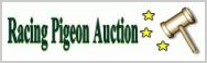Racing pigeon auction